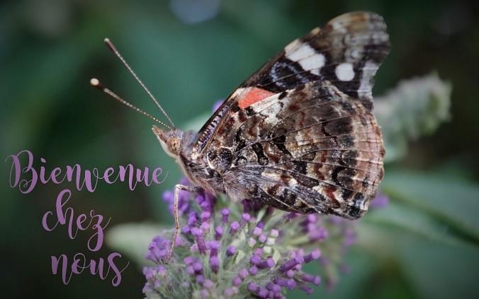 papillon titre en ete